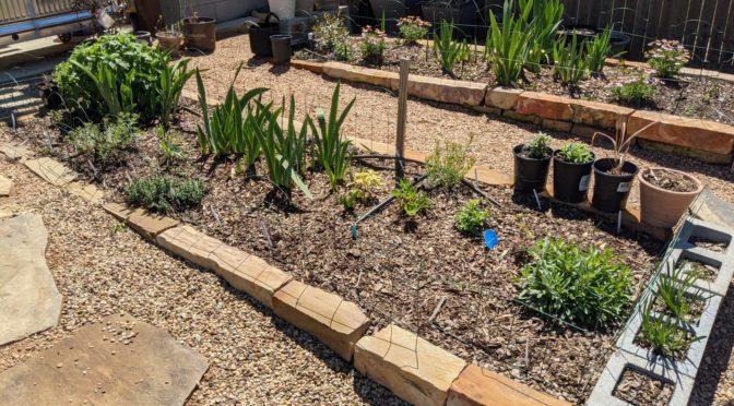 End of March Garden Scenes